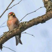 Лесные птицы Пермского края фото с названиями 022