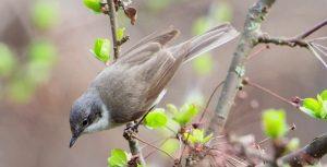 Лесные птицы Среднего Урала фото и название022