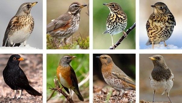 Птицы южного урала картинки и названия птиц