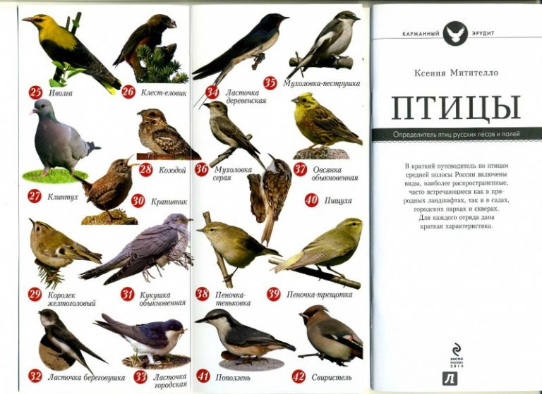 лесные птицы подмосковья фото с названиями картинки видео