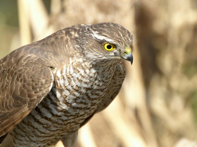 фото с названиями хищных птиц тверской области когда-то