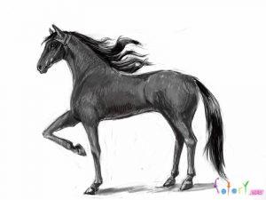 Лошади картинки красивые для срисовки 029