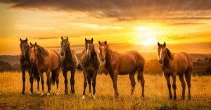 Лошади на рабочий стол скачать бесплатно (22)