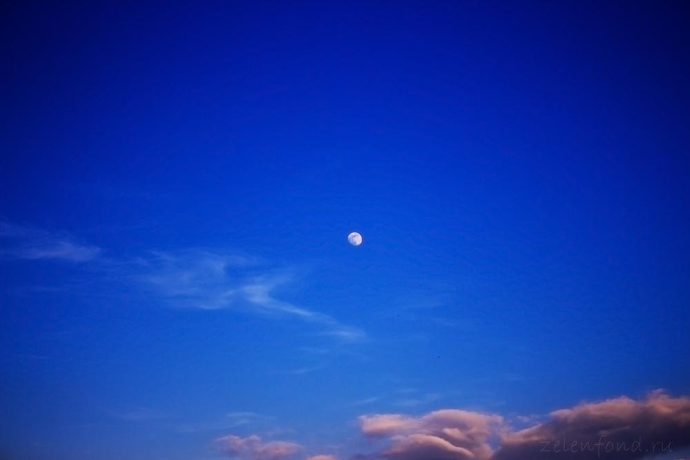 Луна на ночном небе   красивые фото009
