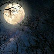 Луна на ночном небе   красивые фото023