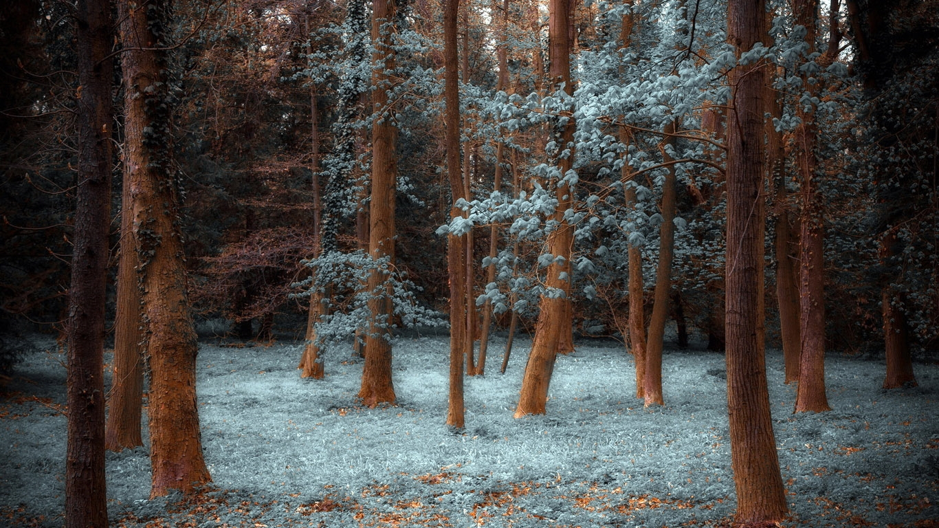 Лучшие картинки зимние на обои   подборка (13)