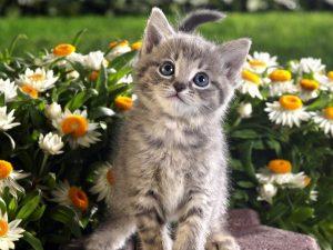 Лучшие картинки котята на рабочий стол (1)