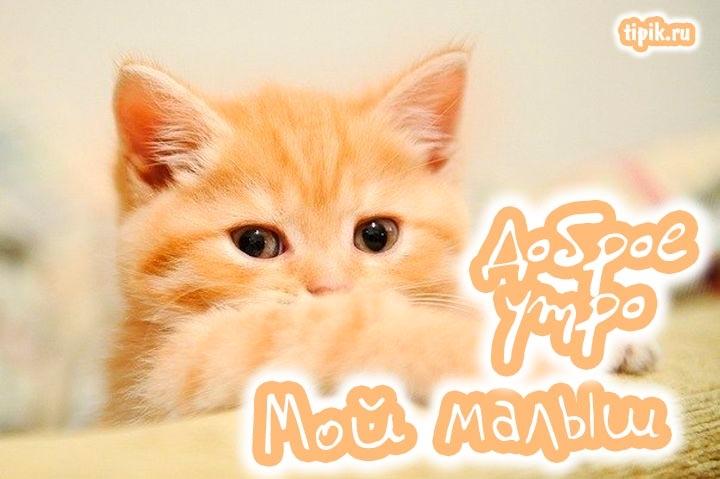 Картинка доброе утро мой милый котик выбрать купить