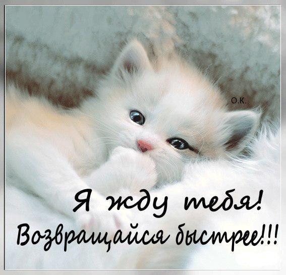 Картинка с надписью жду тебя любимый, днем рождения коты