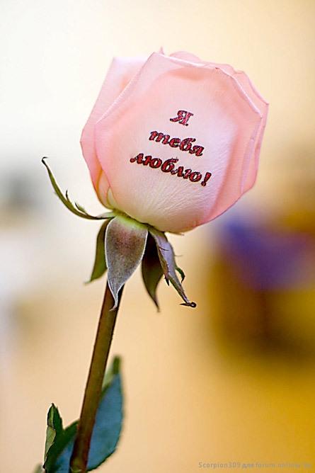 Открытки днем, картинки цветочки с надписями