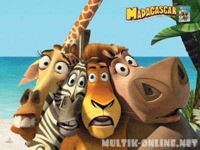 Мадагаскар фото из мультика006