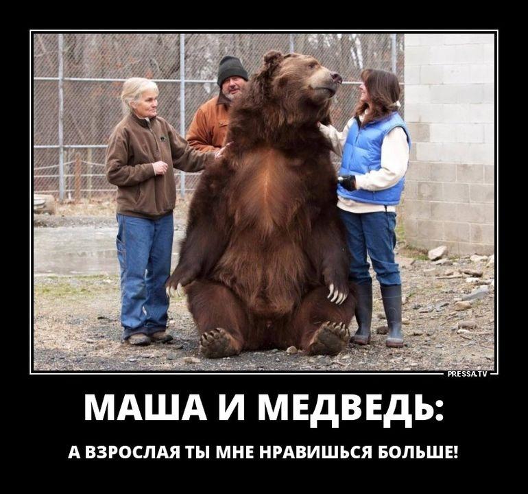 Маша и медведь демотиваторы   подборка 011