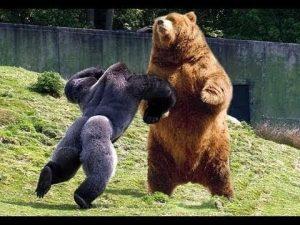 Медведь и птичка картинки   подборка 023