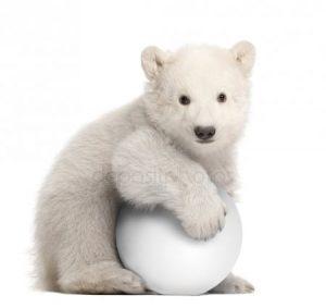 Медведь с медвежонком белый   картинки024