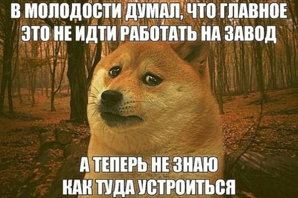 Мемы про работу на заводе   картинки 006