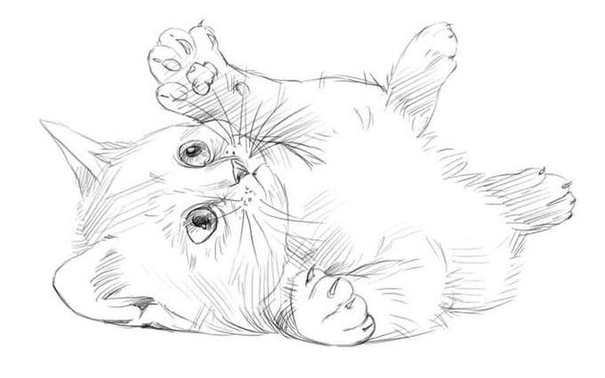 Милые картинки для срисовки котята 016