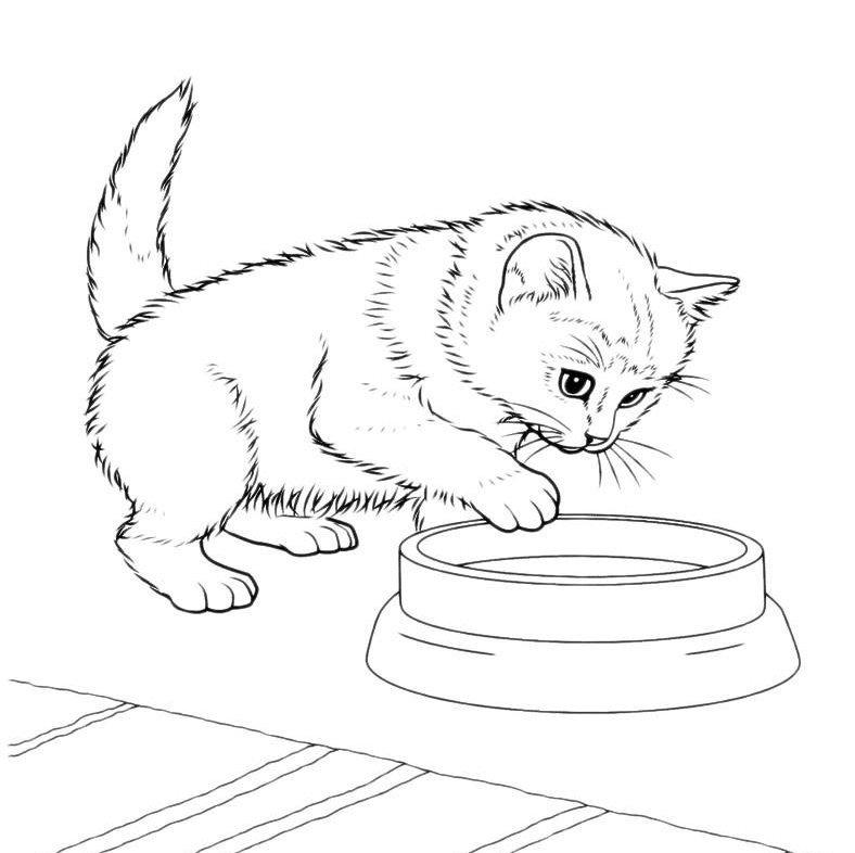 Милые картинки для срисовки котята 020