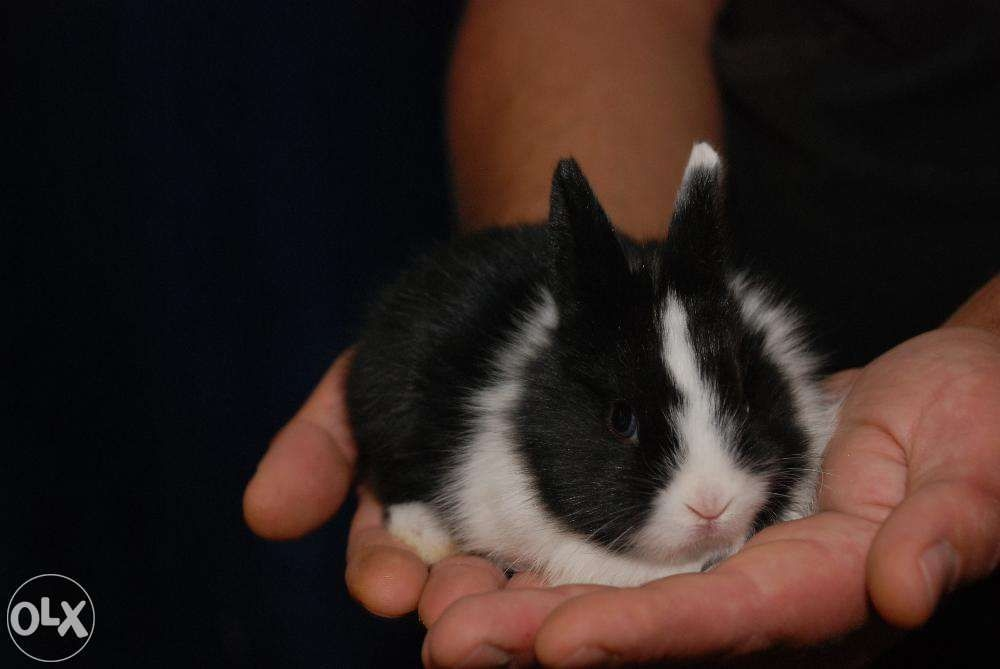 Милые фотки кроликов и крольчат 002
