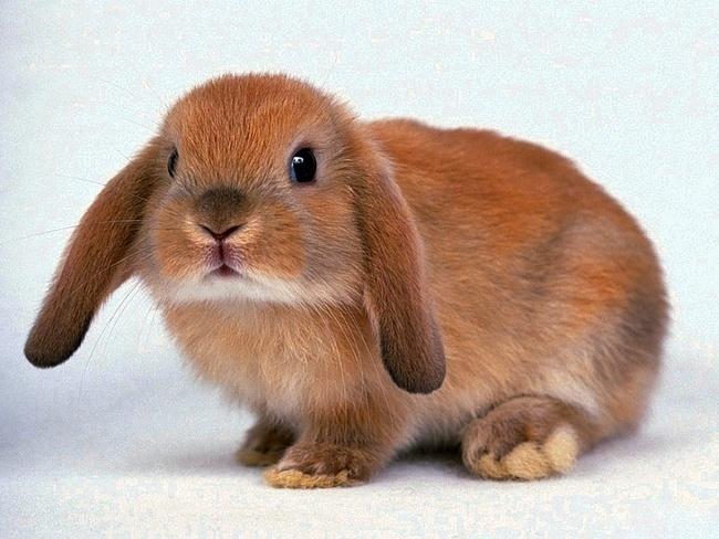 Милые фотки кроликов и крольчат 003