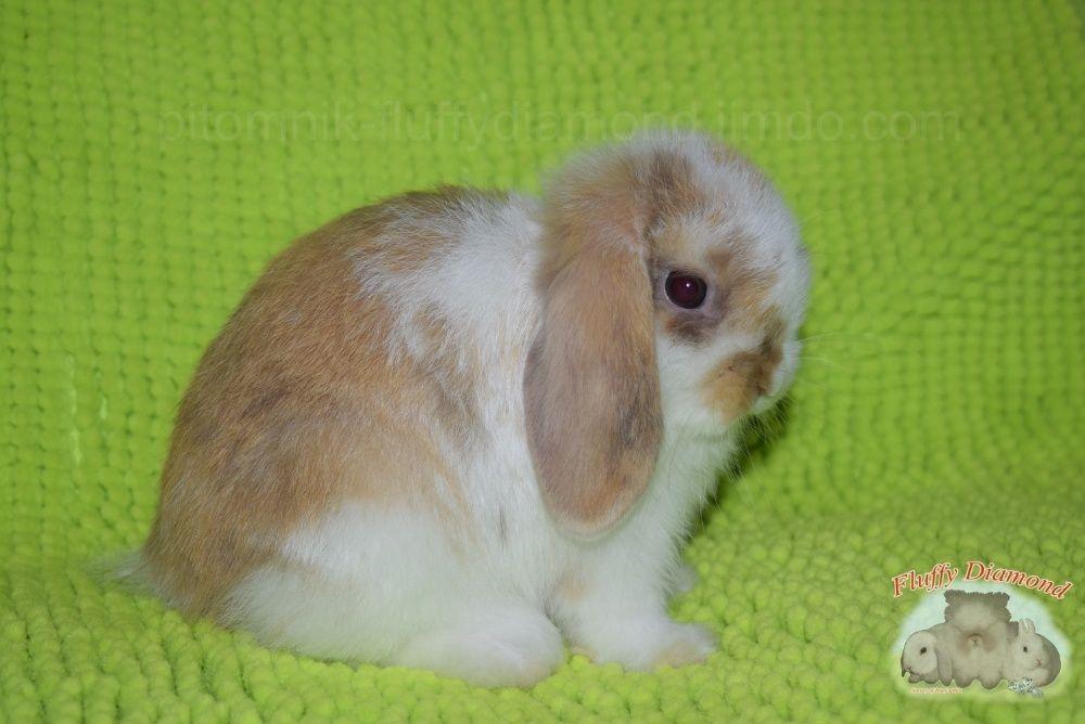 Милые фотки кроликов и крольчат 004