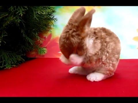 Милые фотки кроликов и крольчат 005