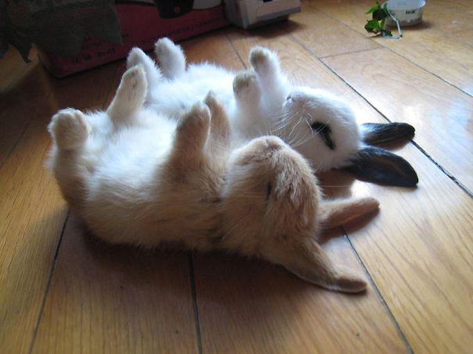 Милые фотки кроликов и крольчат 006