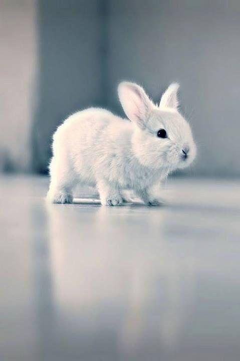 Милые фотки кроликов и крольчат 007
