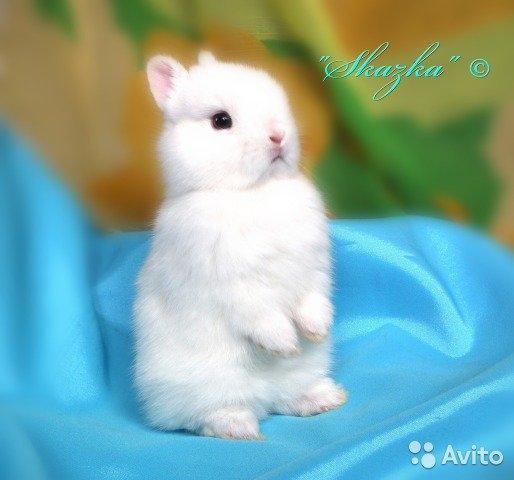 Милые фотки кроликов и крольчат 008