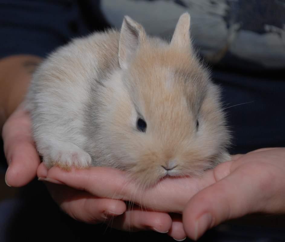 Милые фотки кроликов и крольчат 009