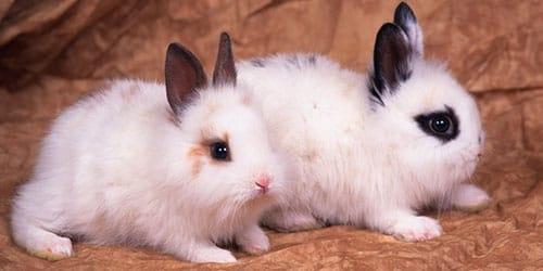 Милые фотки кроликов и крольчат 010