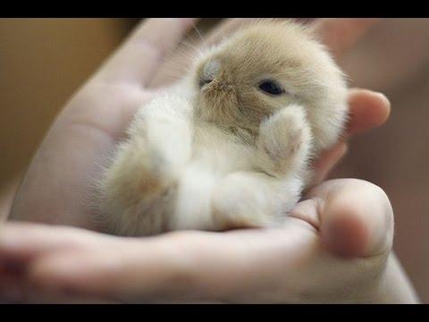 Милые фотки кроликов и крольчат 011