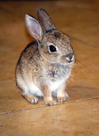 Милые фотки кроликов и крольчат 012