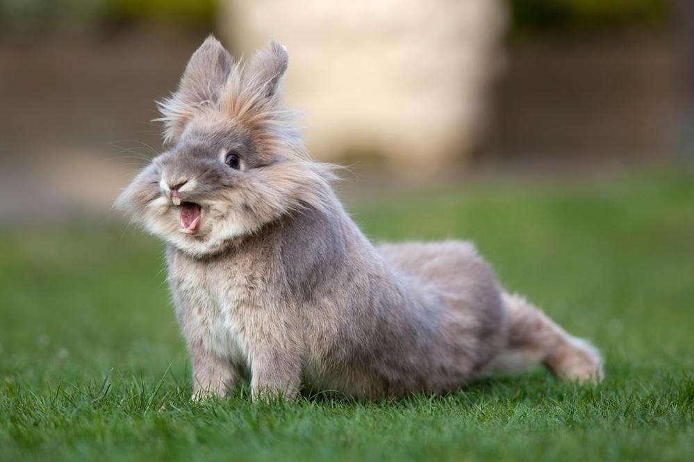 Милые фотки кроликов и крольчат 013
