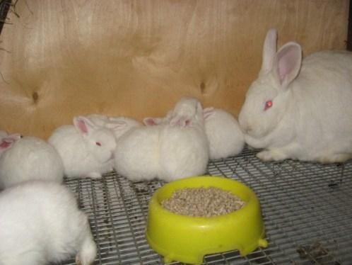 Милые фотки кроликов и крольчат 014
