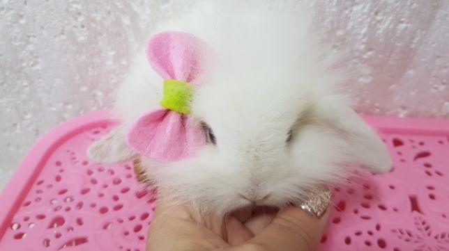 Милые фотки кроликов и крольчат 015