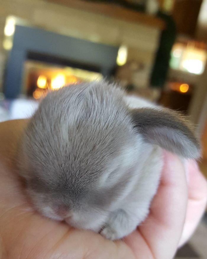 Милые фотки кроликов и крольчат 016