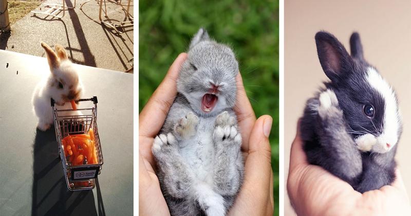 Милые фотки кроликов и крольчат 017
