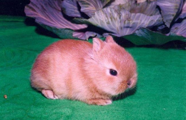 Милые фотки кроликов и крольчат 018
