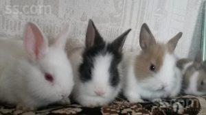 Милые фотки кроликов и крольчат 022
