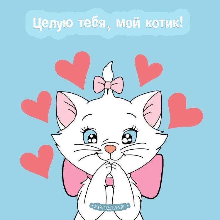Мой милый котик картинки и открытки 001