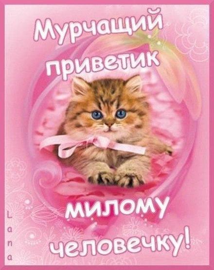 Мой милый котик картинки и открытки 002