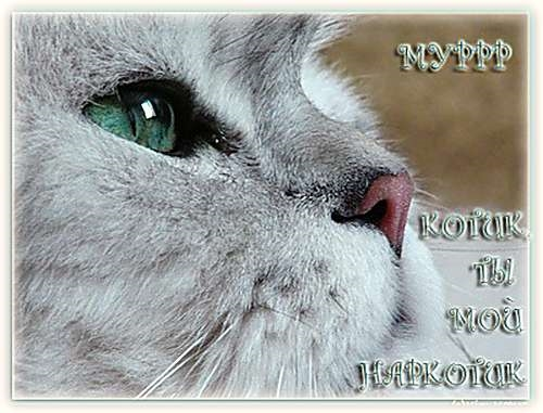 Мой милый котик картинки и открытки 003