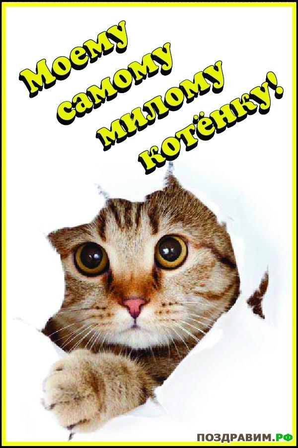 Мой милый котик картинки и открытки 004