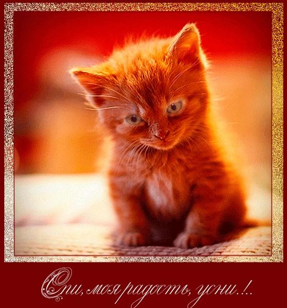 Мой милый котик картинки и открытки 006