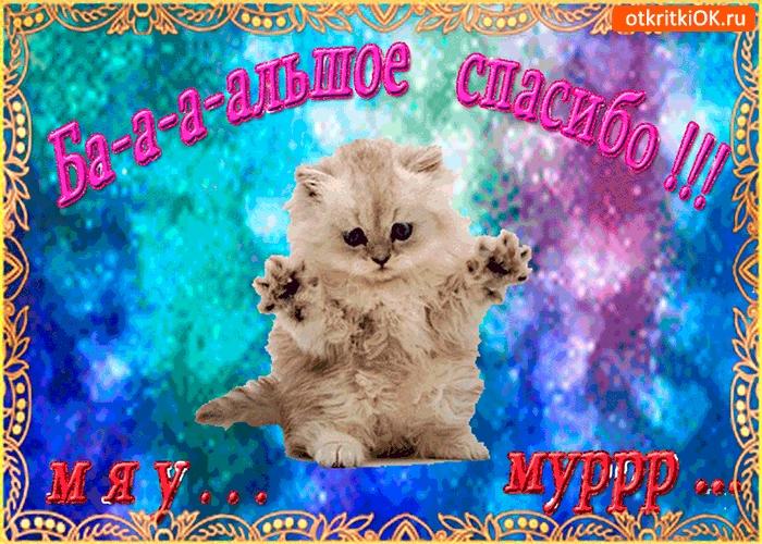 Мой милый котик картинки и открытки 007