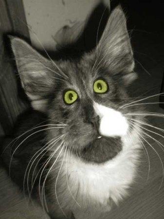 Мой милый котик картинки и открытки 008