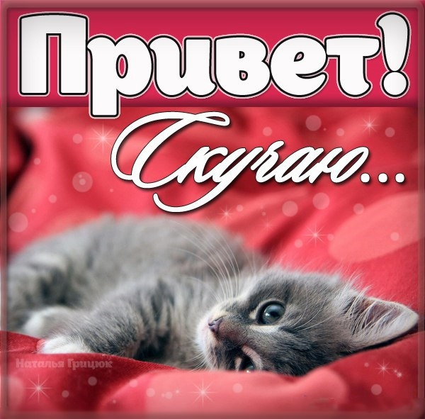 Мой милый котик картинки и открытки 009