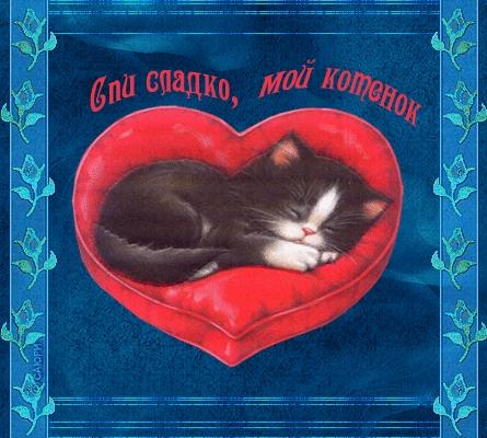 Мой милый котик картинки и открытки 011