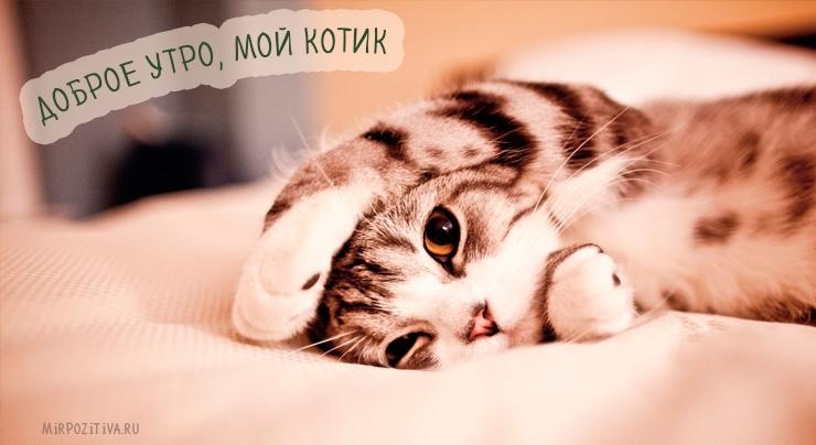Мой милый котик картинки и открытки 013