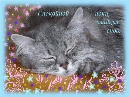 Мой милый котик картинки и открытки 014